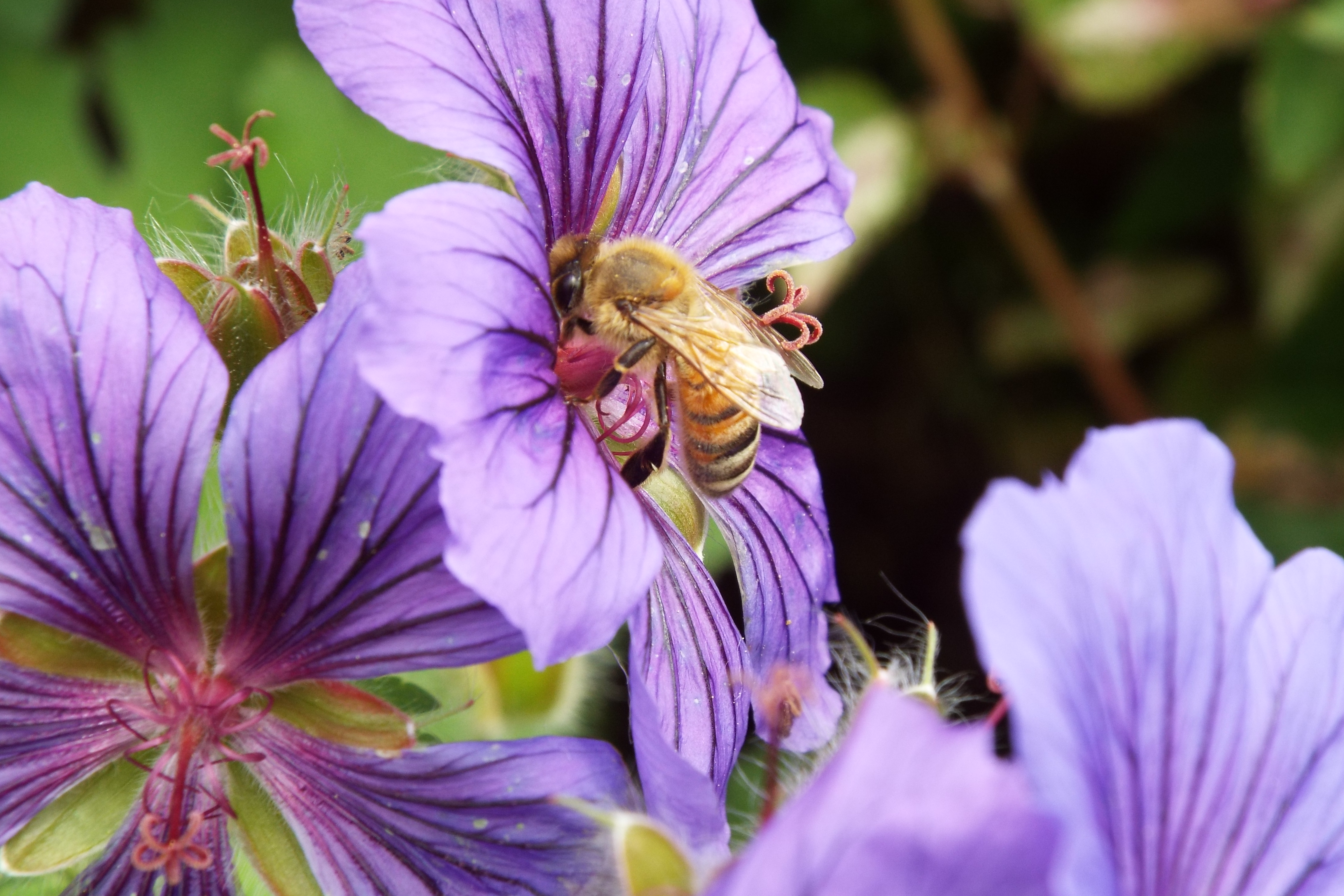 Healthy environment, healthy bees, healthy planet.